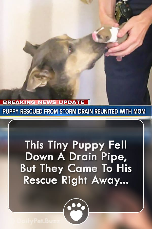 This Tiny Puppy Fell Down A Drain Pipe, But They Came To His Rescue Right Away...
