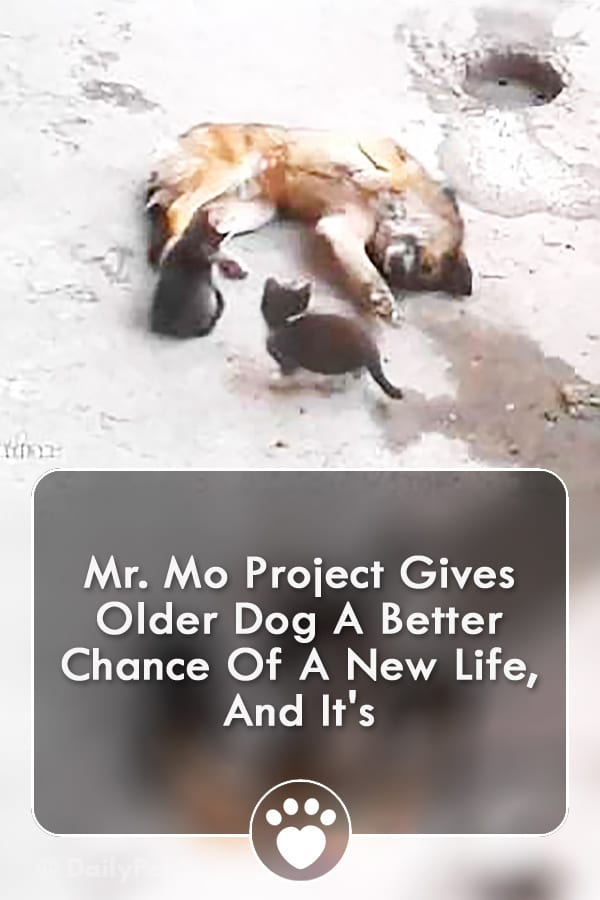 Mr. Mo Project Gives Older Dog A Better Chance Of A New Life, And It\'s
