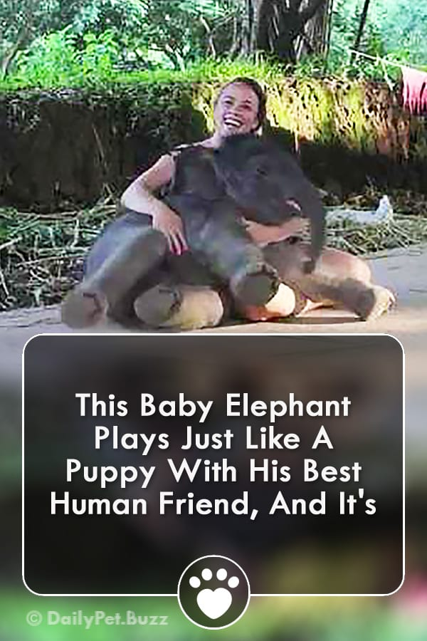 This Baby Elephant Plays Just Like A Puppy With His Best Human Friend, And It\'s