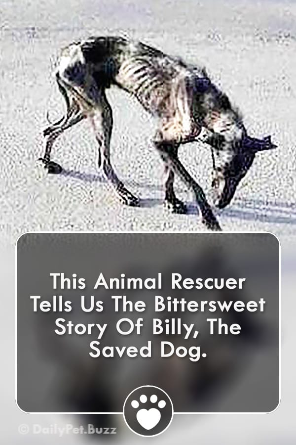 This Animal Rescuer Tells Us The Bittersweet Story Of Billy, The Saved Dog.