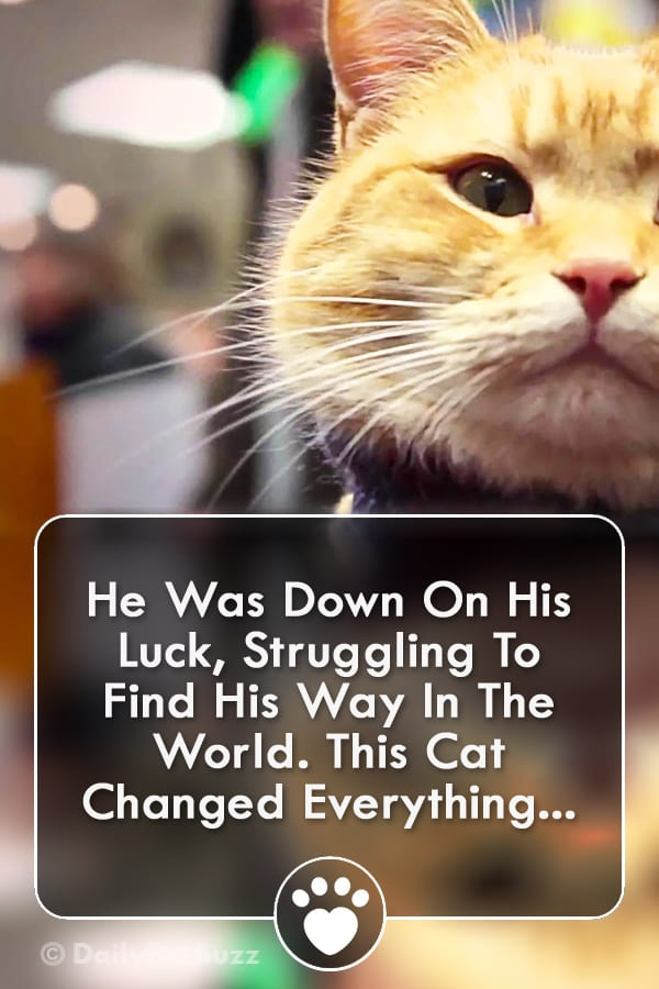 He Was Down On His Luck, Struggling To Find His Way In The World. This Cat Changed Everything...