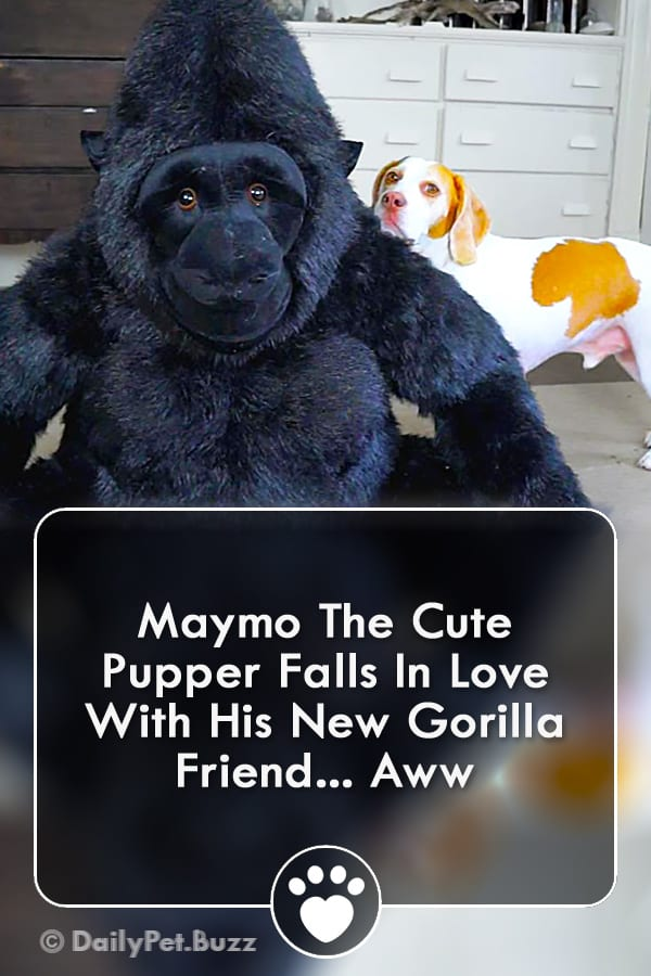 Maymo The Cute Pupper Falls In Love With His New Gorilla Friend... Aww