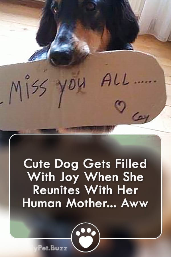 Cute Dog Gets Filled With Joy When She Reunites With Her Human Mother... Aww