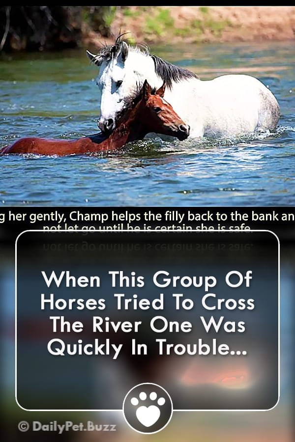 When This Group Of Horses Tried To Cross The River One Was Quickly In Trouble...