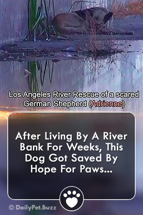 After Living By A River Bank For Weeks, This Dog Got Saved By Hope For Paws...