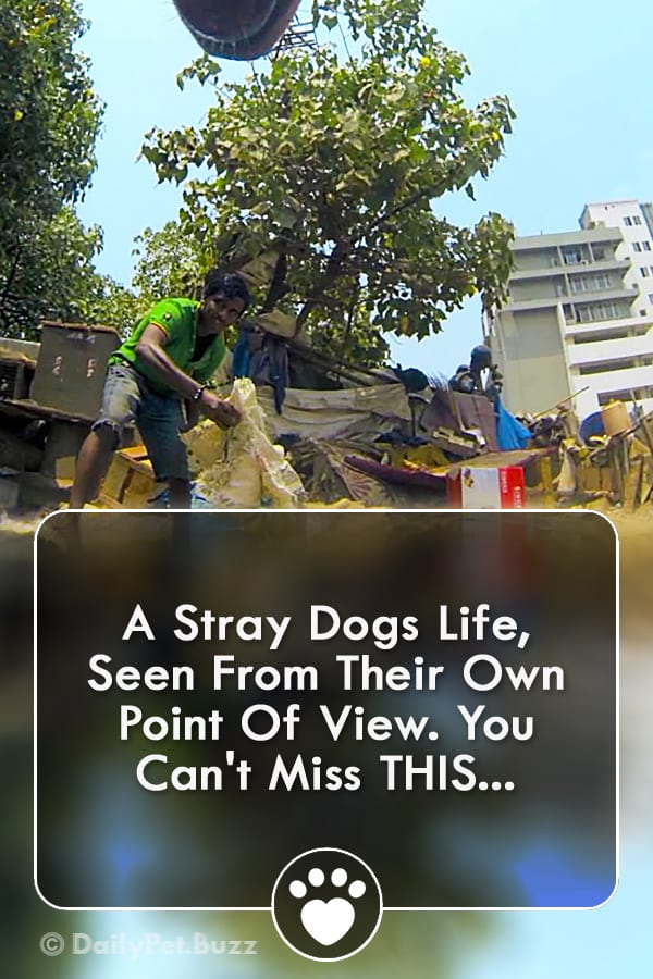 A Stray Dogs Life, Seen From Their Own Point Of View. You Can\'t Miss THIS...