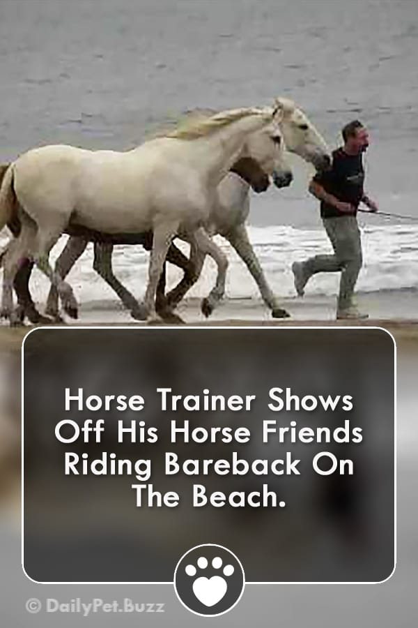 Horse Trainer Shows Off His Horse Friends Riding Bareback On The Beach.