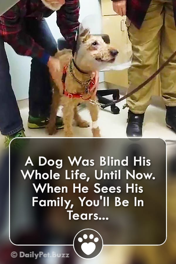 A Dog Was Blind His Whole Life, Until Now. When He Sees His Family, You\'ll Be In Tears...