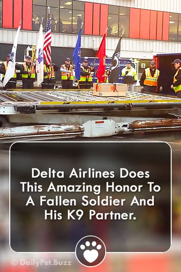 Delta Airlines Does This Amazing Honor To A Fallen Soldier And His K9 Partner.