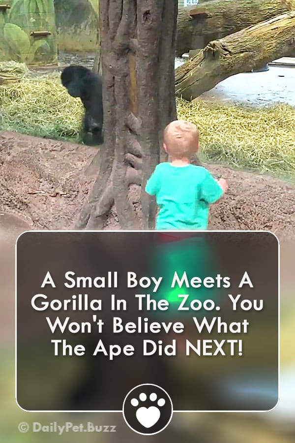 A Small Boy Meets A Gorilla In The Zoo. You Won\'t Believe What The Ape Did NEXT!