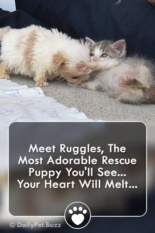 Meet Ruggles, The Most Adorable Rescue Puppy You\'ll See... Your Heart Will Melt...
