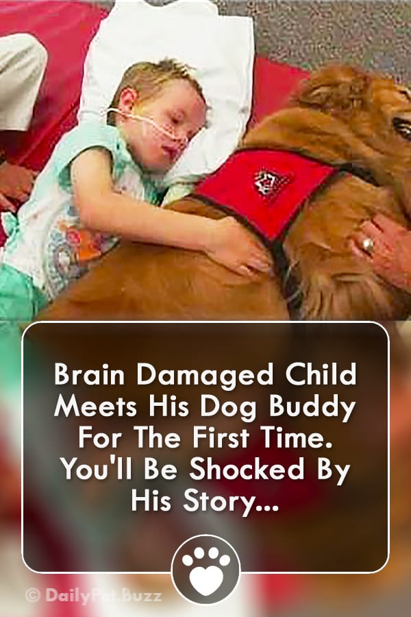 Brain Damaged Child Meets His Dog Buddy For The First Time. You\'ll Be Shocked By His Story...