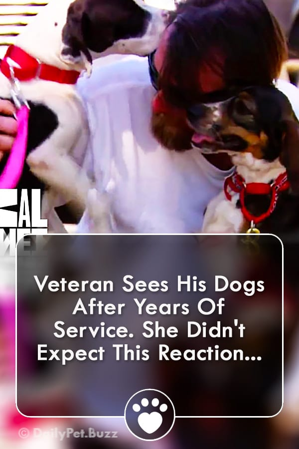 Veteran Sees His Dogs After Years Of Service. She Didn\'t Expect This Reaction...