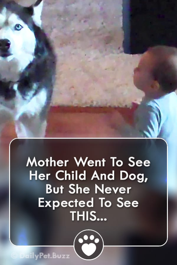 Mother Went To See Her Child And Dog, But She Never Expected To See THIS...