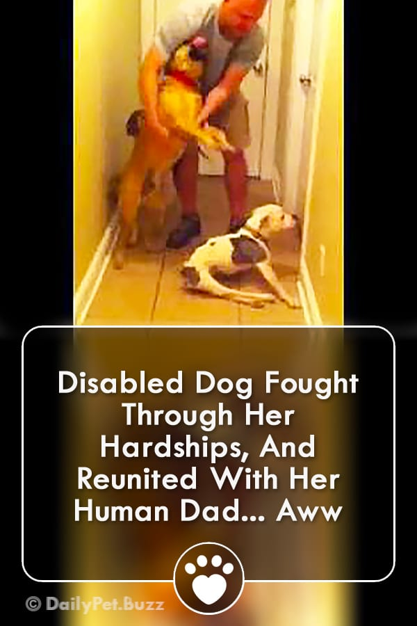 Disabled Dog Fought Through Her Hardships, And Reunited With Her Human Dad... Aww