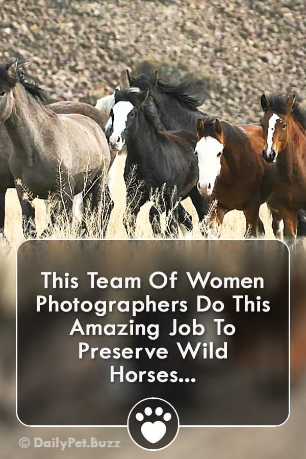 This Team Of Women Photographers Do This Amazing Job To Preserve Wild Horses...
