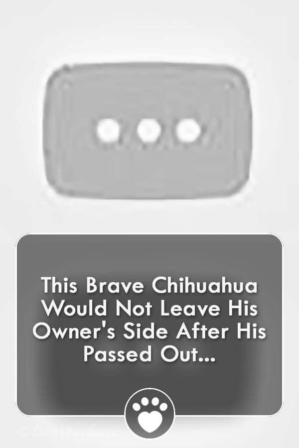 This Brave Chihuahua Would Not Leave His Owner\'s Side After His Passed Out...