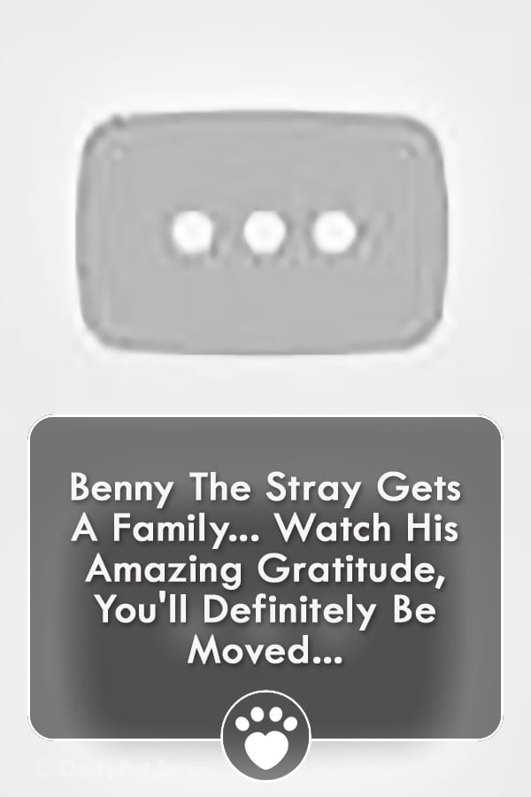 Benny The Stray Gets A Family... Watch His Amazing Gratitude, You\'ll Definitely Be Moved...