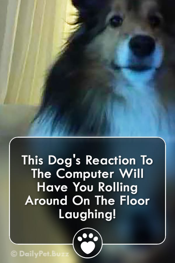 This Dog\'s Reaction To The Computer Will Have You Rolling Around On The Floor Laughing!