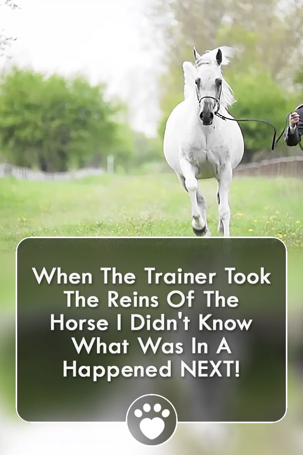 When The Trainer Took The Reins Of The Horse I Didn\'t Know What Was In A Happened NEXT!