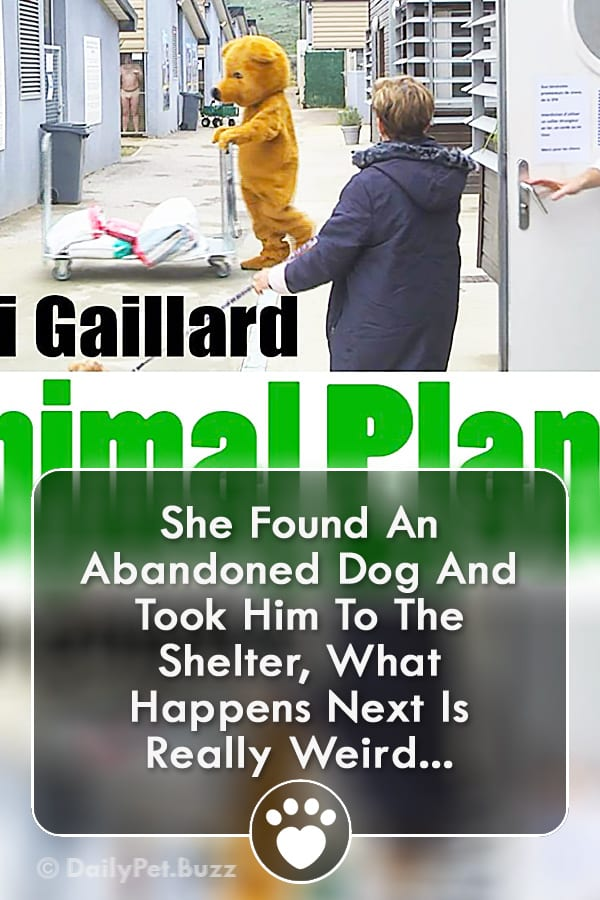 She Found An Abandoned Dog And Took Him To The Shelter, What Happens Next Is Really Weird...