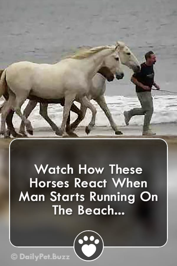 Watch How These Horses React When Man Starts Running On The Beach...
