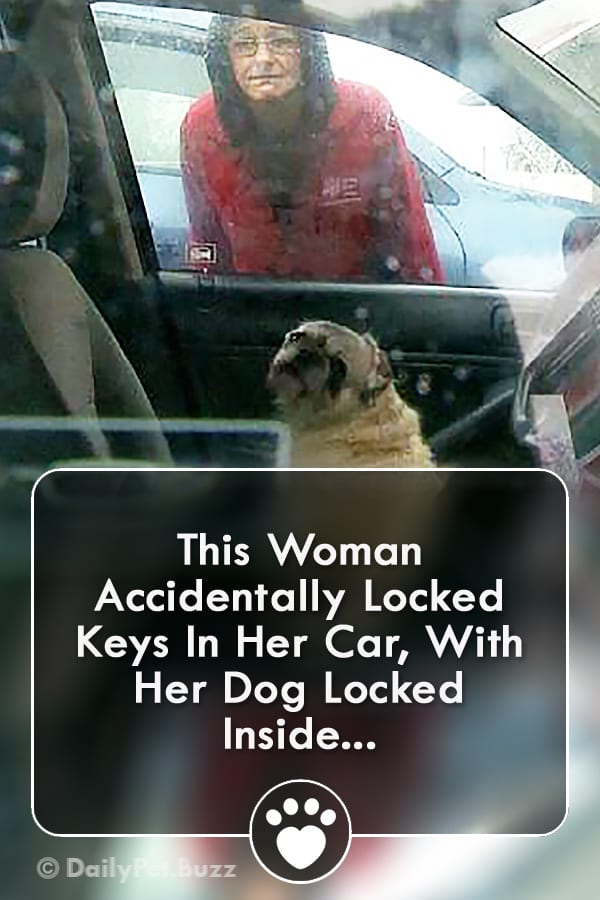 This Woman Accidentally Locked Keys In Her Car, With Her Dog Locked Inside...