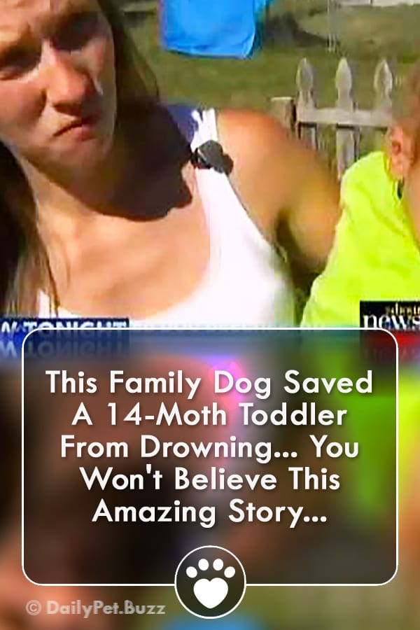 This Family Dog Saved A 14-Moth Toddler From Drowning... You Won\'t Believe This Amazing Story...