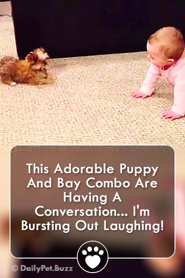 This Adorable Puppy And Bay Combo Are Having A Conversation... I\'m Bursting Out Laughing!
