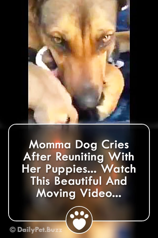 Momma Dog Cries After Reuniting With Her Puppies... Watch This Beautiful And Moving Video...