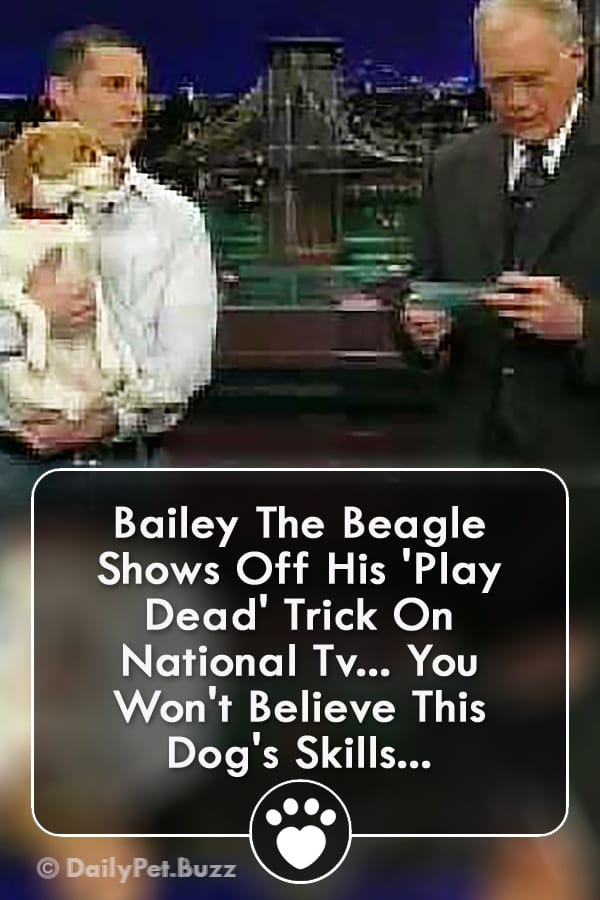Bailey The Beagle Shows Off His \'Play Dead\' Trick On National Tv... You Won\'t Believe This Dog\'s Skills...