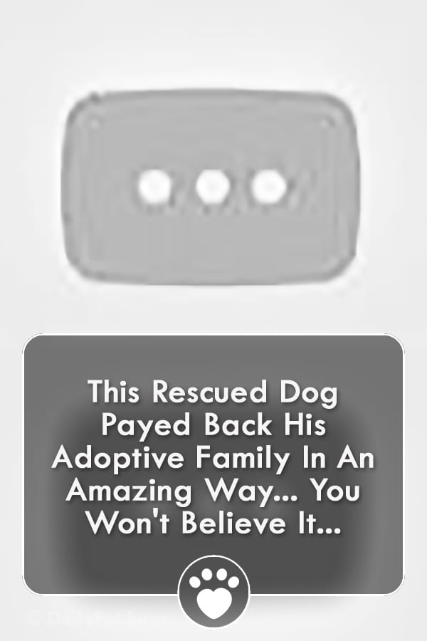 This Rescued Dog Payed Back His Adoptive Family In An Amazing Way... You Won\'t Believe It...