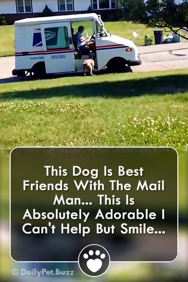 This Dog Is Best Friends With The Mail Man... This Is Absolutely Adorable I Can\'t Help But Smile!