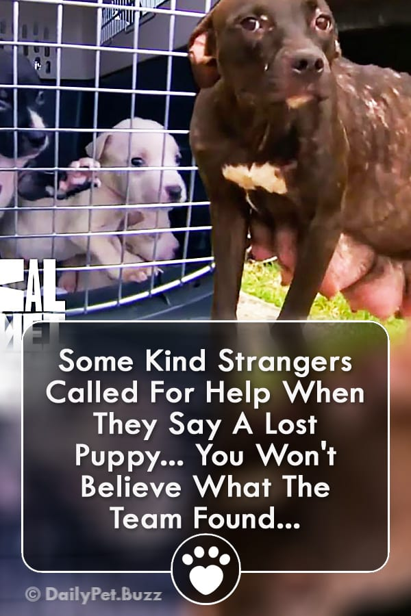 Some Kind Strangers Called For Help When They Say A Lost Puppy... You Won\'t Believe What The Team Found...
