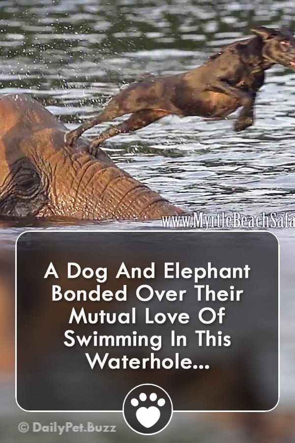 A Dog And Elephant Bonded Over Their Mutual Love Of Swimming In This Waterhole...
