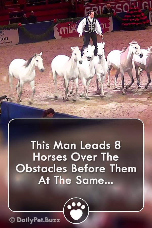 This Man Leads 8 Horses Over The Obstacles Before Them At The Same...