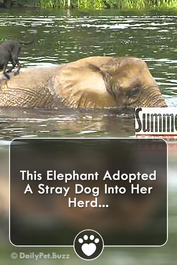 This Elephant Adopted A Stray Dog Into Her Herd...