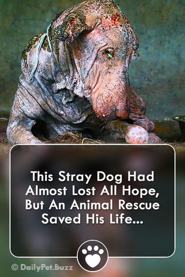 This Stray Dog Had Almost Lost All Hope, But An Animal Rescue Saved His Life...
