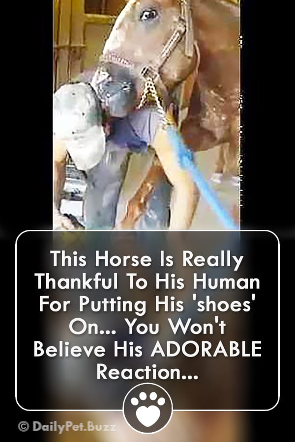This Horse Is Really Thankful To His Human For Putting His \'shoes\' On... You Won\'t Believe His ADORABLE Reaction...