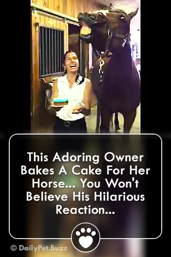 This Adoring Owner Bakes A Cake For Her Horse... You Won\'t Believe His Hilarious Reaction...