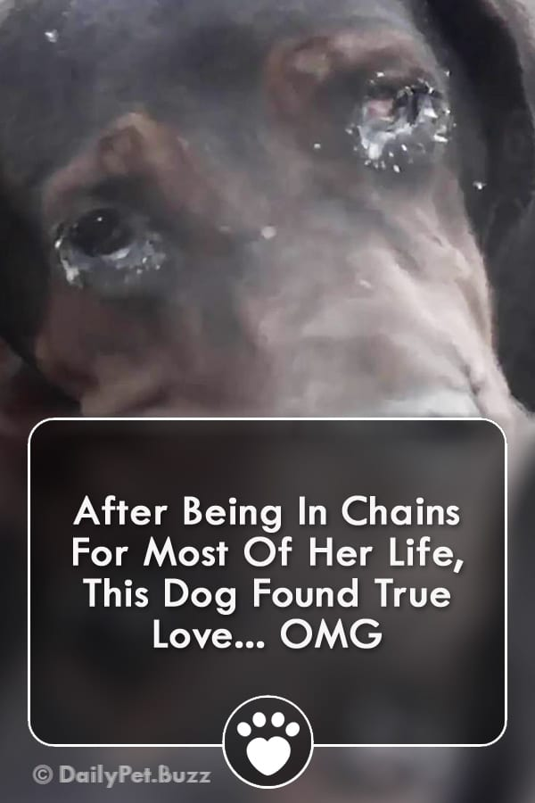After Being In Chains For Most Of Her Life, This Dog Found True Love... OMG