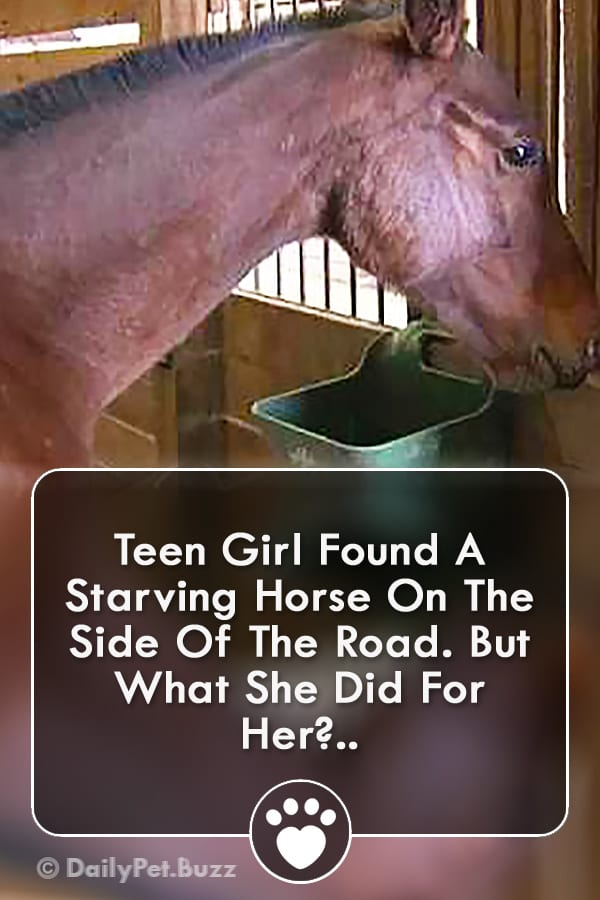 Teen Girl Found A Starving Horse On The Side Of The Road. But What She Did For Her?..