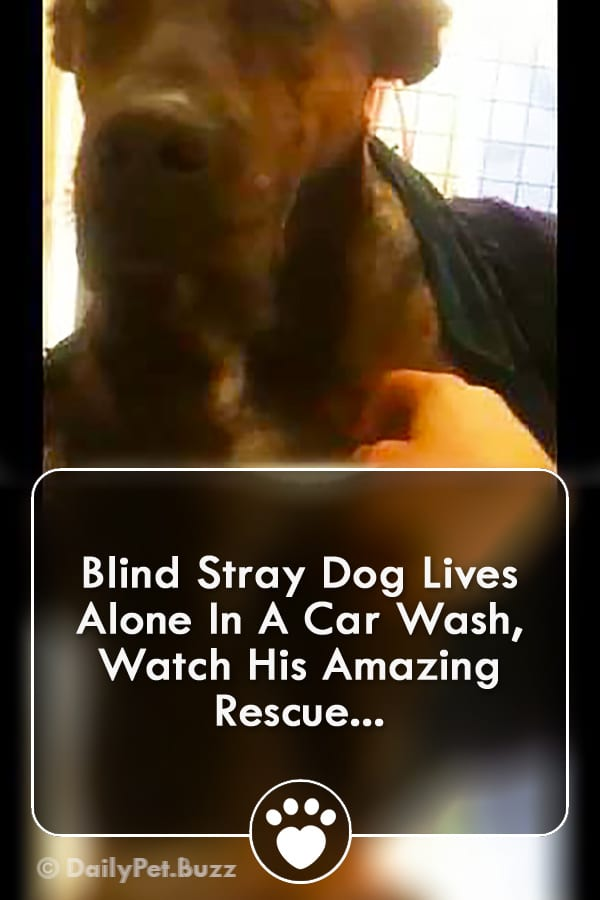 Blind Stray Dog Lives Alone In A Car Wash, Watch His Amazing Rescue...