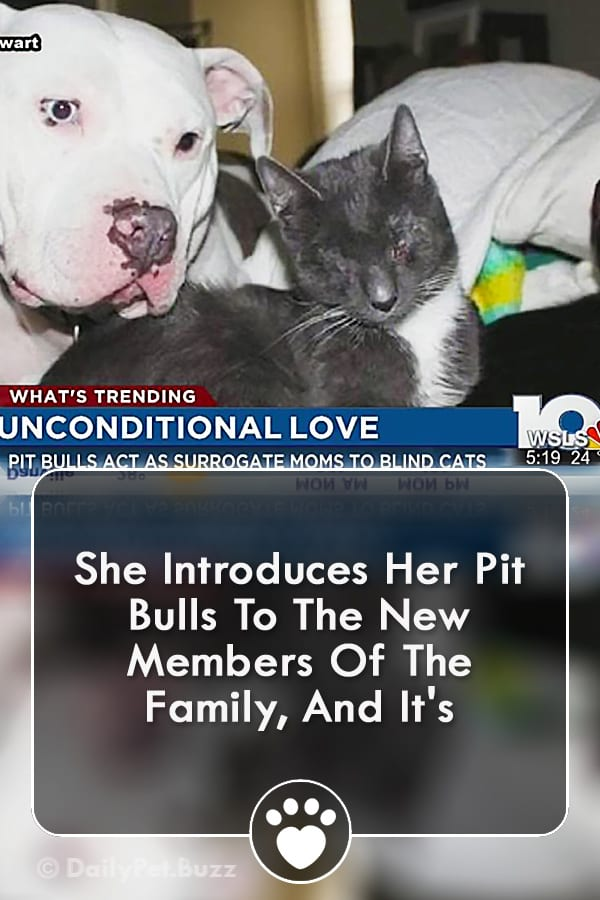 She Introduces Her Pit Bulls To The New Members Of The Family, And It\'s