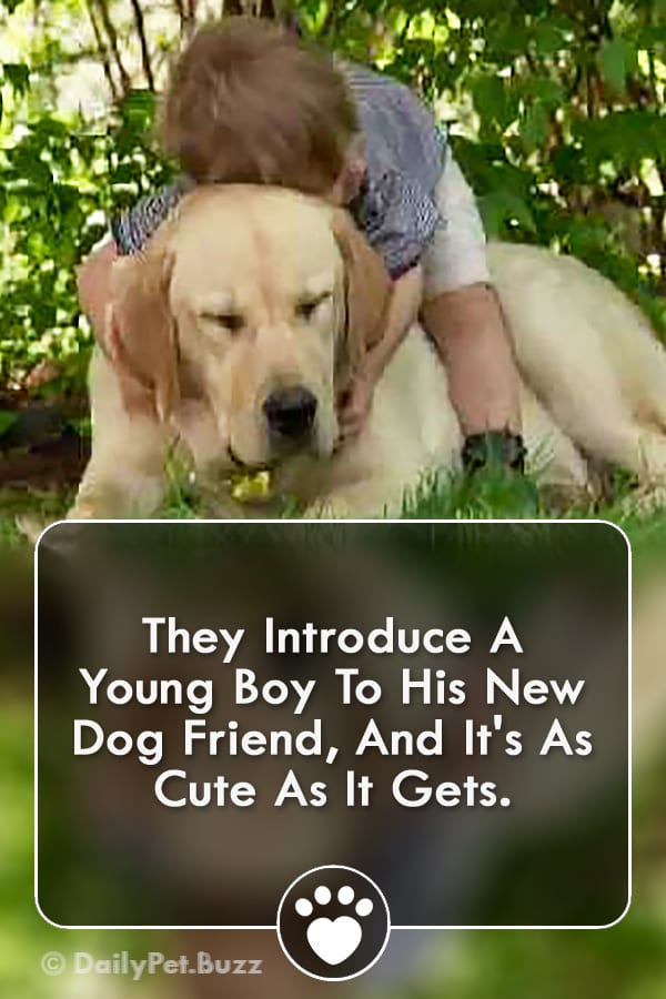 They Introduce A Young Boy To His New Dog Friend, And It\'s As Cute As It Gets.