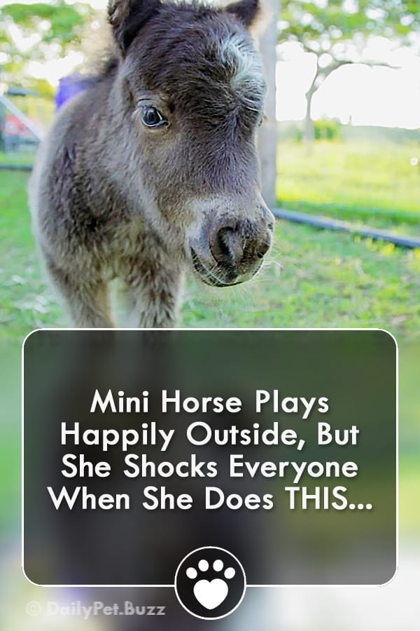 Mini Horse Plays Happily Outside, But She Shocks Everyone When She Does THIS...