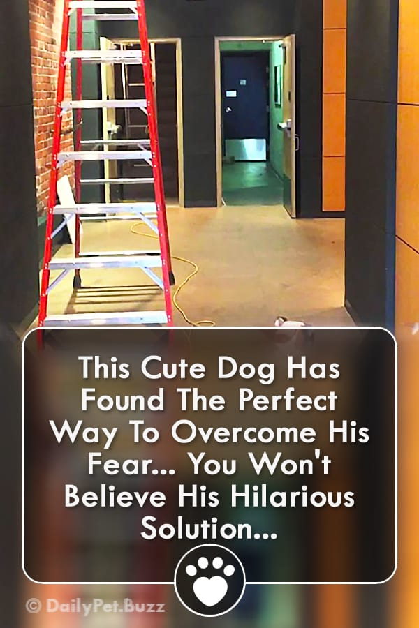 This Cute Dog Has Found The Perfect Way To Overcome His Fear... You Won\'t Believe His Hilarious Solution...