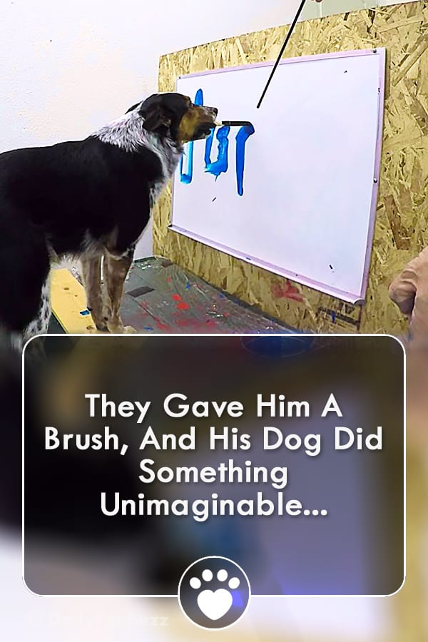 They Gave Him A Brush, And His Dog Did Something Unimaginable...