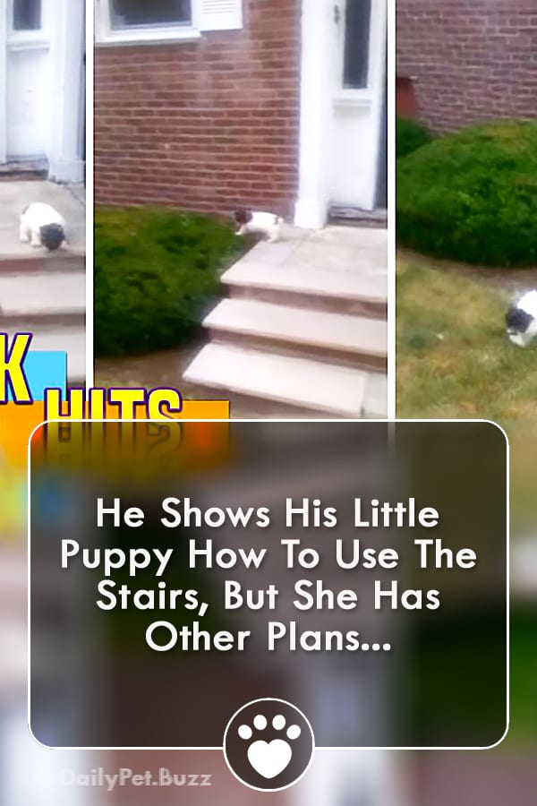 He Shows His Little Puppy How To Use The Stairs, But She Has Other Plans...