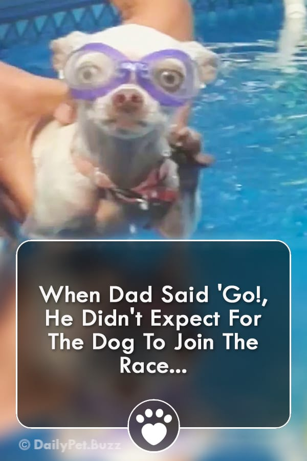 When Dad Said \'Go!, He Didn\'t Expect For The Dog To Join The Race...